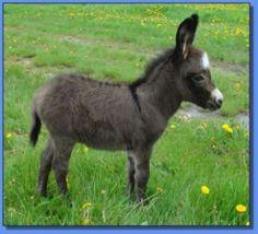 donkey705206e92dc5f634e83484b1553866e1